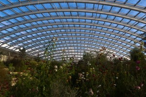 Gardens of Wales Glasshouse