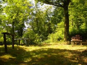 Old Oak Barn woods in July