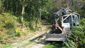 Woodland at Cwmpalis