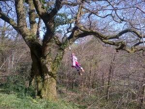 Swings in the woods