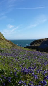 Boat Skomer 2015 - Wales Coast App
