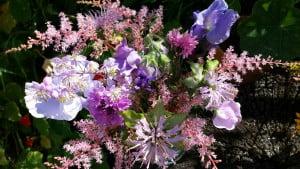 My Garden in Carmarthenshire