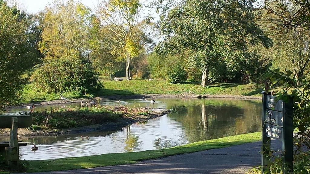 Wetland Centre scene