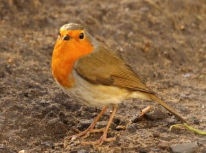 Bird watching Carmarthenshire