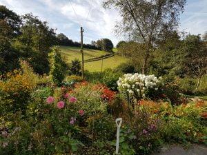 Garden Carmarthenshire