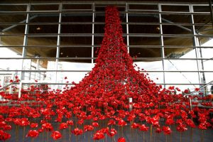Cardiff Poppies