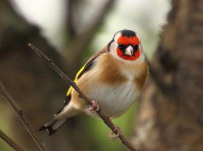 Bird watching in Carmarthenshire